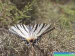 Бабочки острова Кос